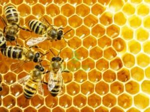 Mật ong lâm đồng
